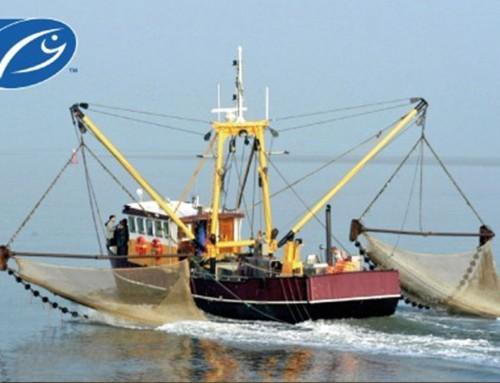 Garnalenvisserij krijgt MSC Keurmerk