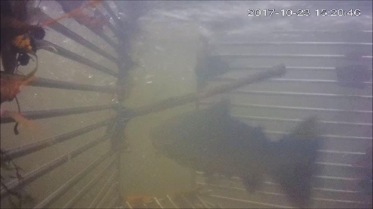 Optrek salmoniden Roer