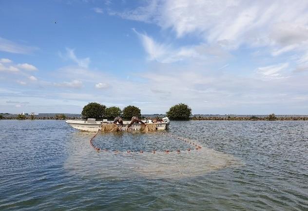 Nulmonitoring KRW-maatregelen Haringvliet en Hollands Diep